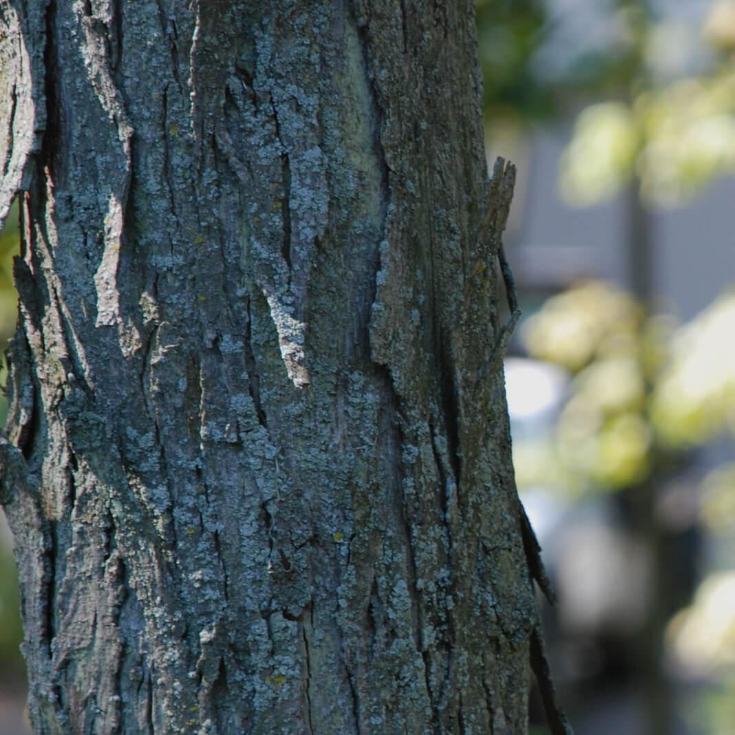 Mack Land Landscape Architects Wauconda Denver Tree Inventory